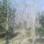 2月の相原中央公園。落葉樹が多いのが分かります。